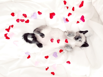 Your Weekend Love Horoscope for February 9 to 11: Meow! It's a Weekend for Love
