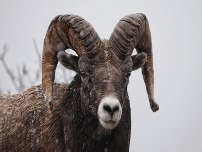 It's Almost Aries Season! What Does that Mean for Your Sign?