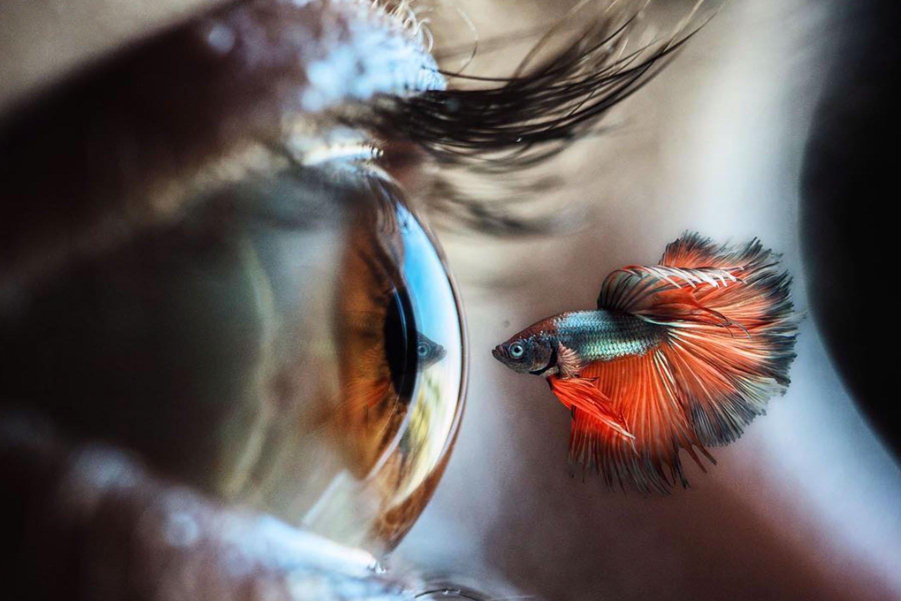 fish eye vision