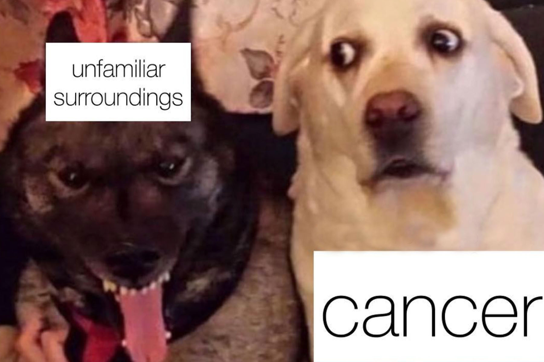 21 Cancer Memes That Totally Get the Zodiac's Most Sensitive Sign