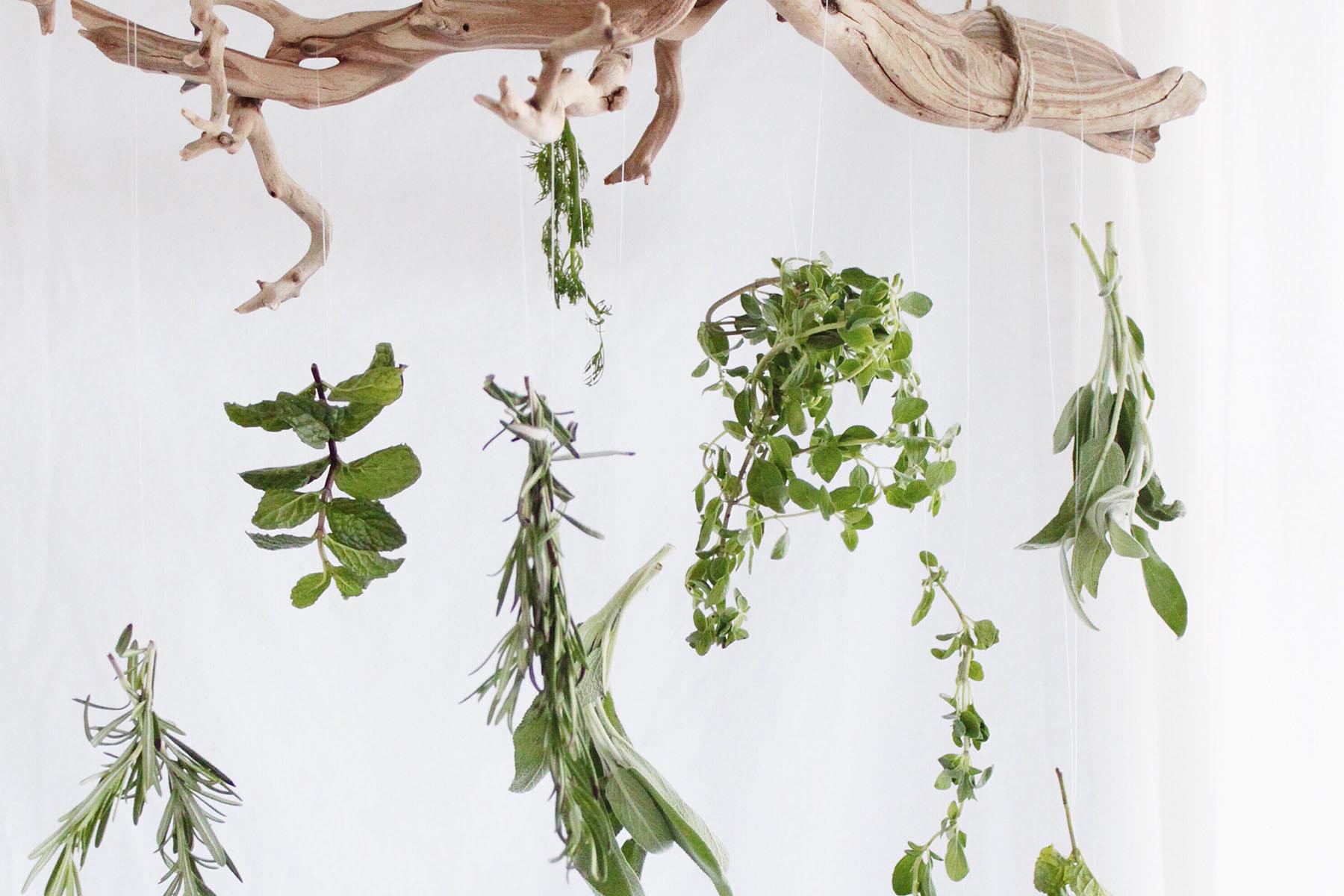 herbs dried