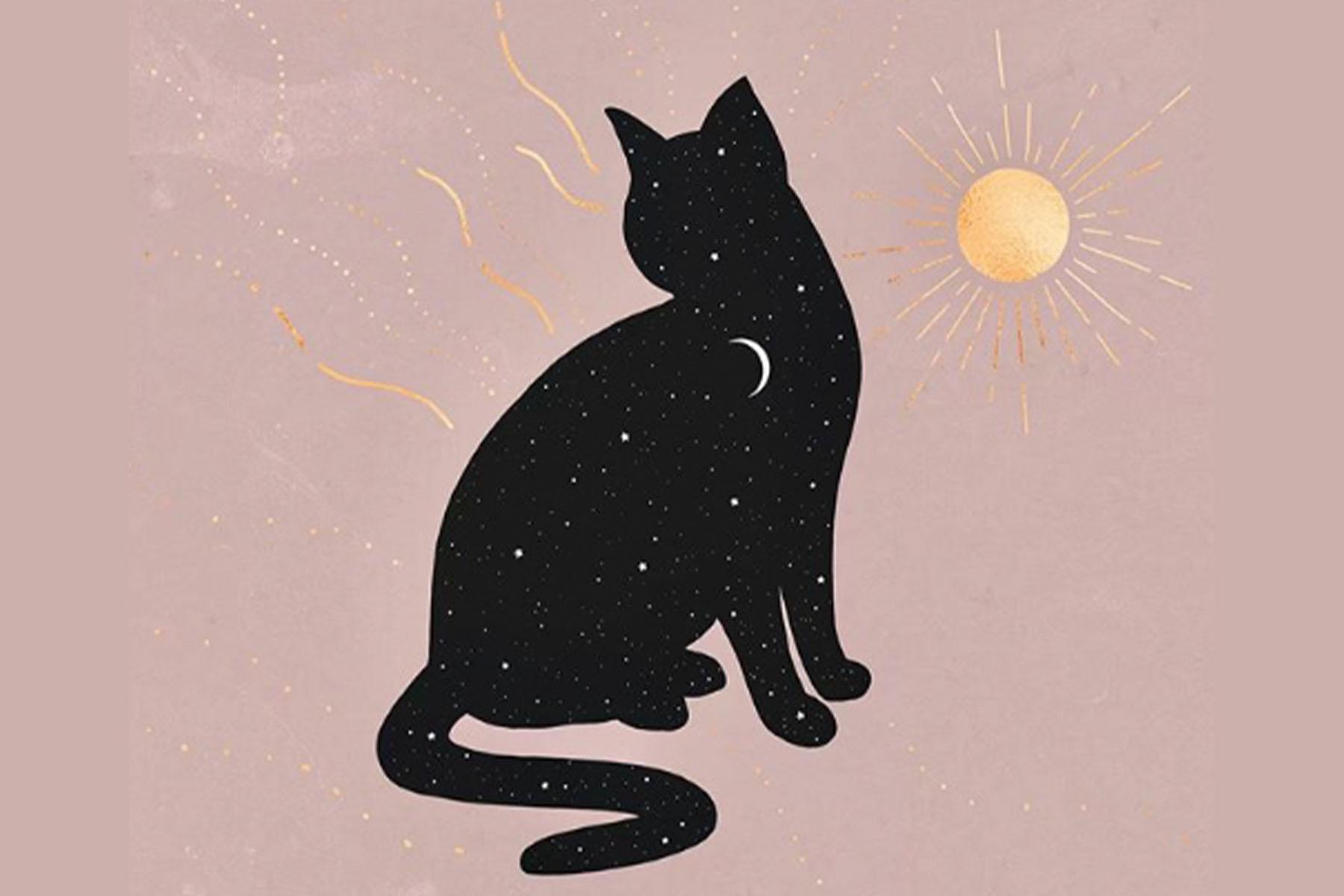 cat and sun