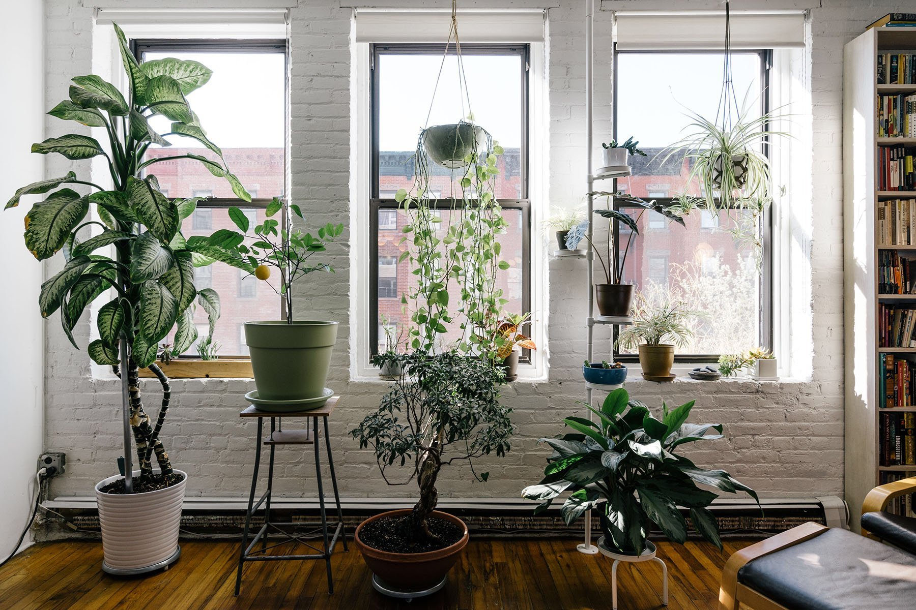 The Best Houseplant for Your Zodiac Sign